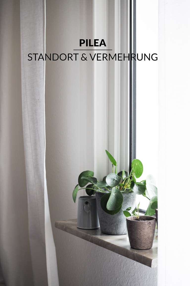1 Pilea Vermehren New Beginnings Urban Jungle Bloggers Paulsvera 19 Von 23