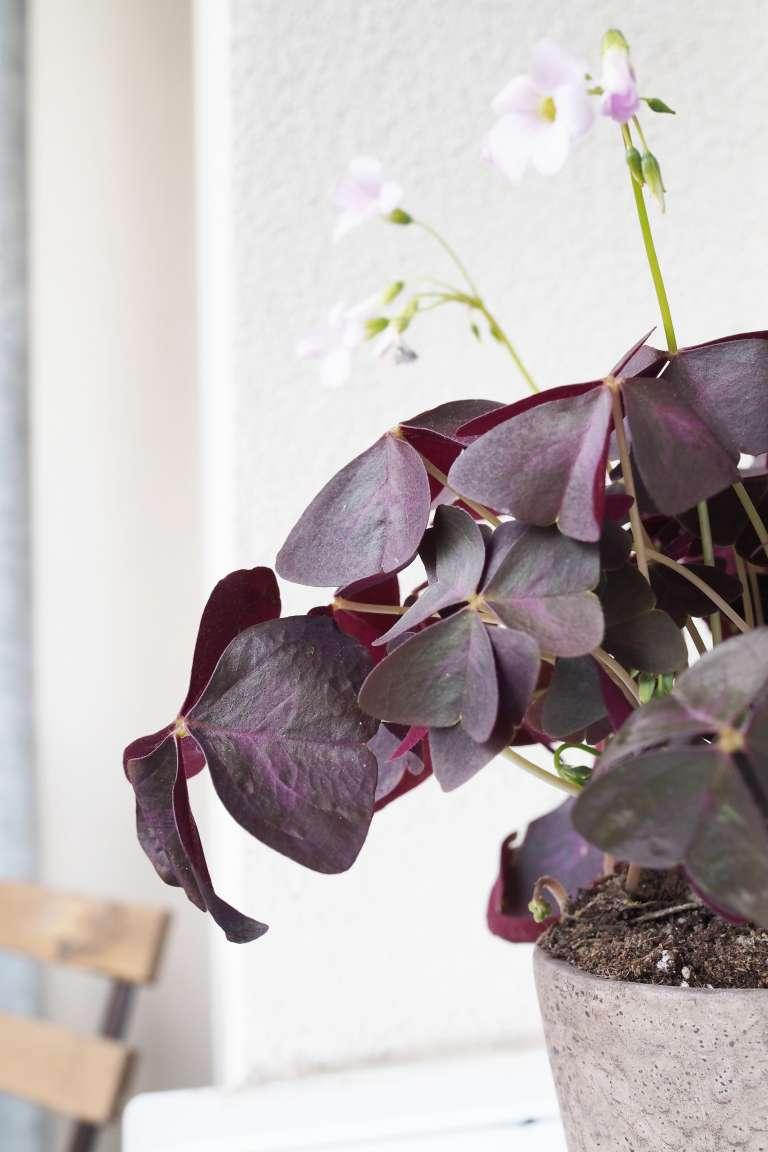 27 Living Balkon Deko Fruhling Blumen Ediths Iblaursen Paulsvera