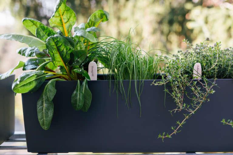 Diy Krauterschilder Krauterstecker Pflanzenschilder Selber Machen Fimo Ideen Transfer Druck Auf Fimo Paulsvera 2