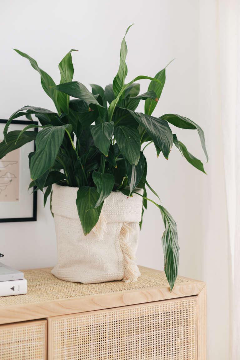 DIY IKEA Hack Blumentopf aus Teppich Sortso Boho DIY Deko Idee paulsvera 10