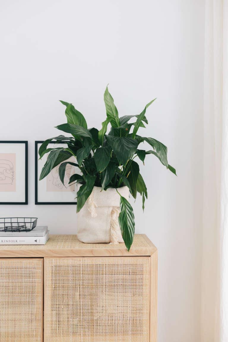 DIY IKEA Hack Blumentopf aus Teppich Sortso Boho DIY Deko Idee paulsvera 2