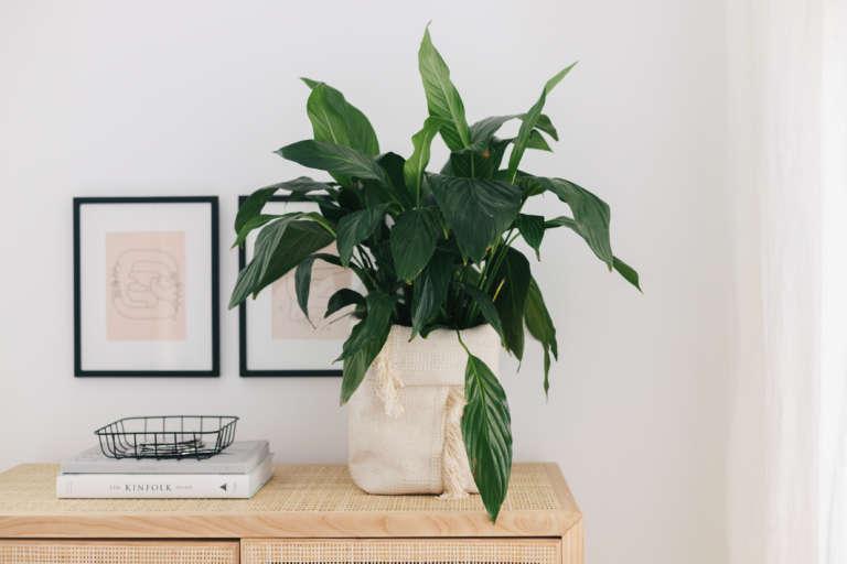 DIY IKEA Hack Blumentopf aus Teppich Sortso Boho DIY Deko Idee paulsvera 5
