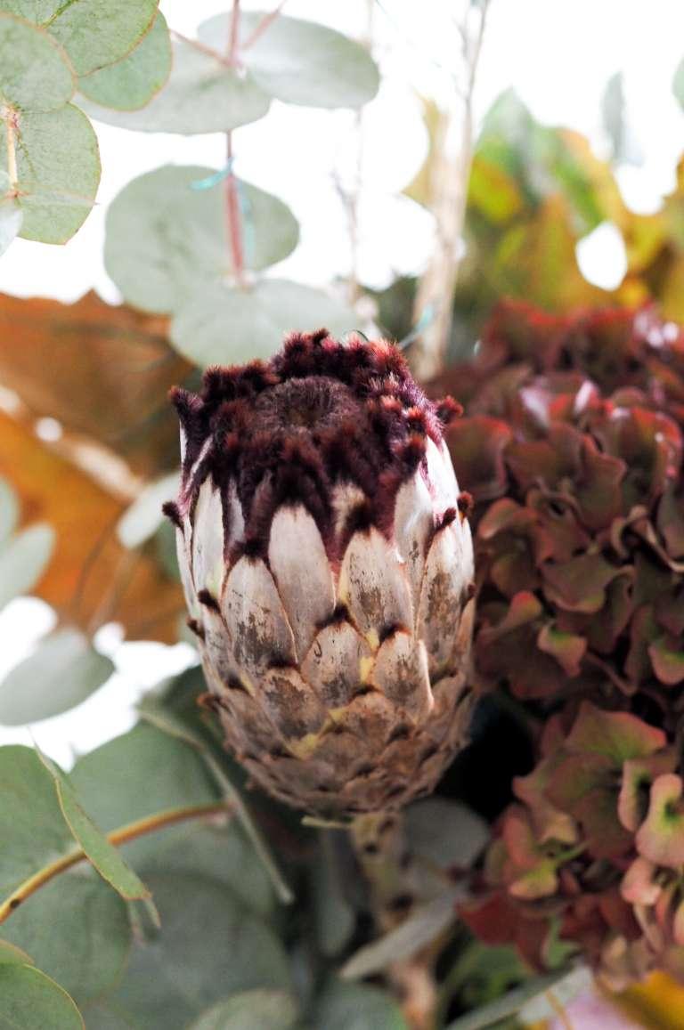 Herbststrauß-mit-Protea-Hortensie-Eukalyptus-Herbstlaub - moderner-herbstlicher-Blumenstrauß