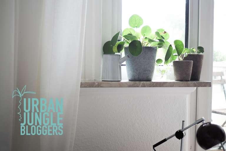 Pilea Vermehren New Beginnings Urban Jungle Bloggers Paulsvera 10 Von 23