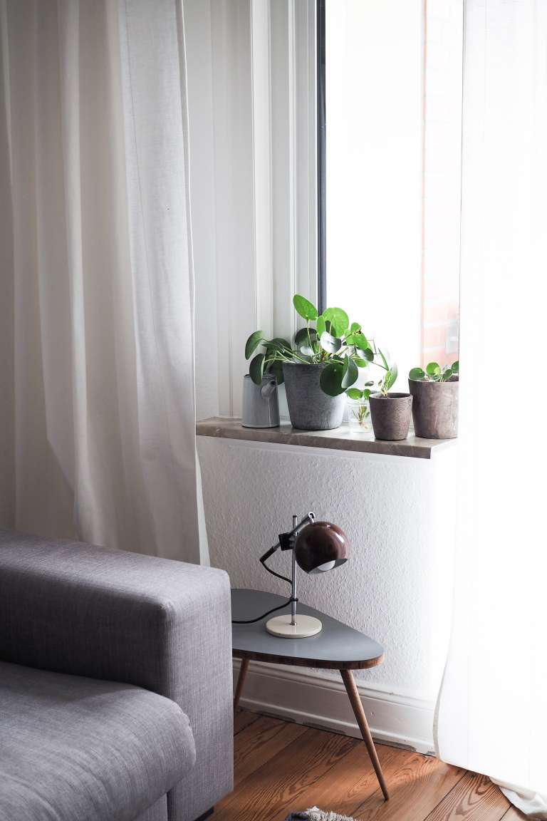 Pilea Vermehren New Beginnings Urban Jungle Bloggers Paulsvera 22 Von 23