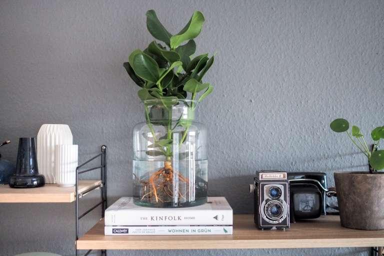 Waterplant Urban Jungle Bloggers Trend Pflanzen Zuhause Wohnen Mit Pflanzen Grun Einrichten Einrichtungstipps Paulsvera 3