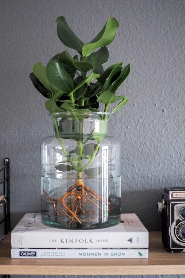 Wohnzimmer-pflanzen-pflegeleicht-Pflanzen-im-Glas-Water-plants-pflanzen-im-wasser-vase-zuhause-einrichten-dekoideen-wohnen-mit-pflanzen-paulsvera