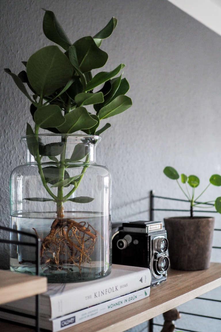 Wohnzimmer-pflanzen-pflegeleicht-Pflanzen-im-Glas-Water-plants-pflanzen-im-wasser-vase-zuhause-einrichten-dekoideen-wohnen-mit-pflanzen-urban-jungle-bloggers-paulsvera