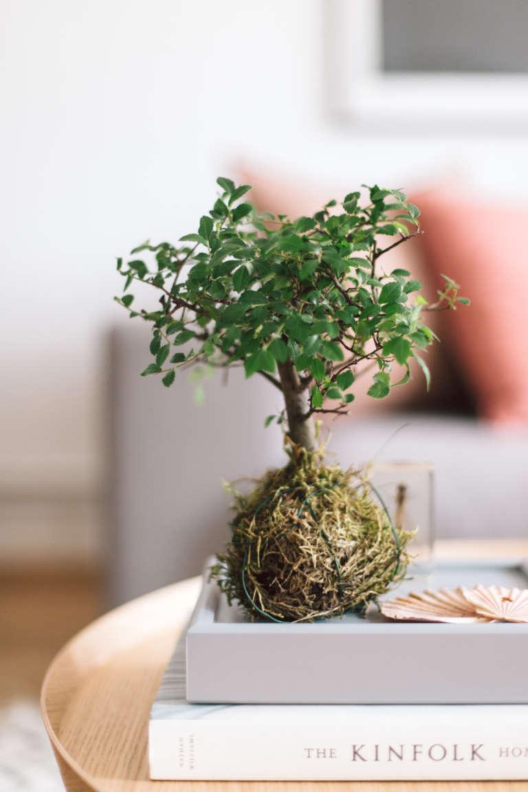 pflanzentrend-zimmerpflanze-bonsia-kokedama-japanische-pflanzenkunst-interior-trend-wohntrend-paulsvera-1