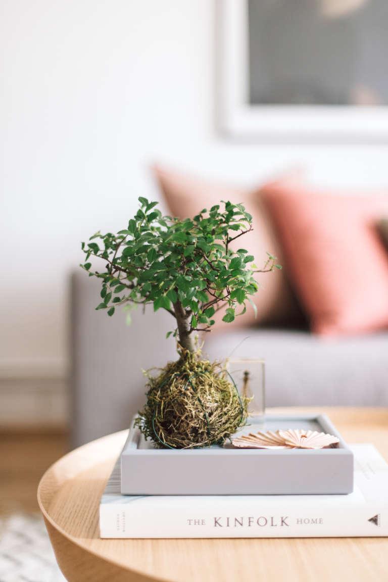 pflanzentrend-zimmerpflanze-bonsia-kokedama-japanische-pflanzenkunst-interior-trend-wohntrend-paulsvera