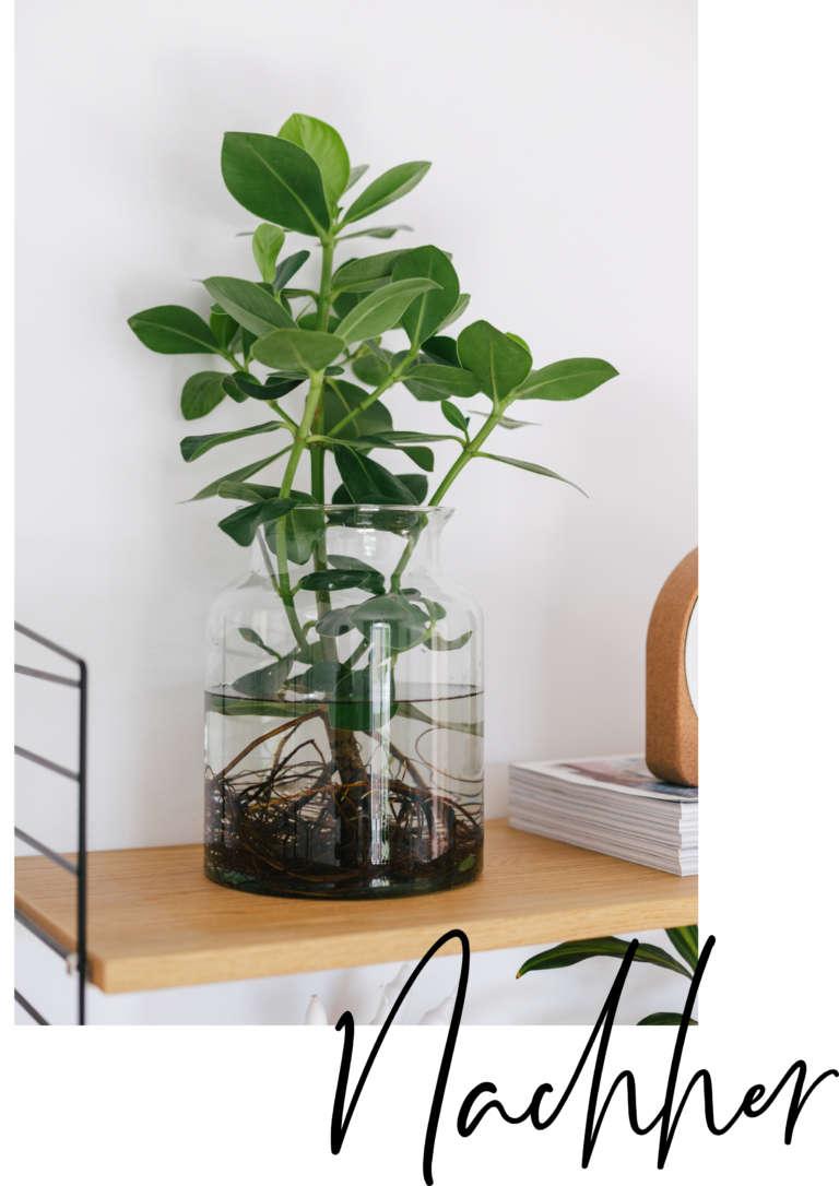 Waterplants nachher